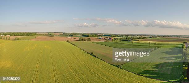 aerial view of rapeseed field - london ontario stock photos and pictures