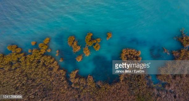 aerial view of reeds at lake balaton - hungary stock pictures, royalty-free photos & images