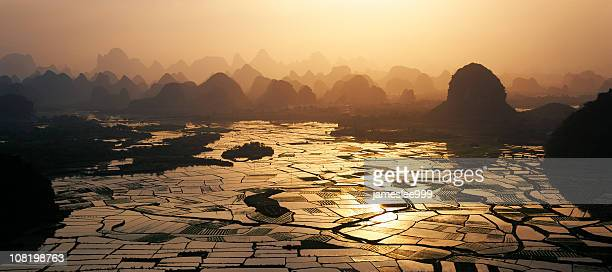 Aerial view of rice fields at sunset