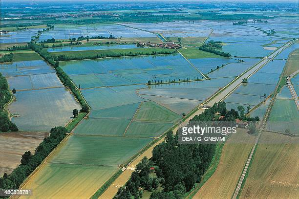 Aerial view of rice fields in the Province of Novara Piedmont Region Italy