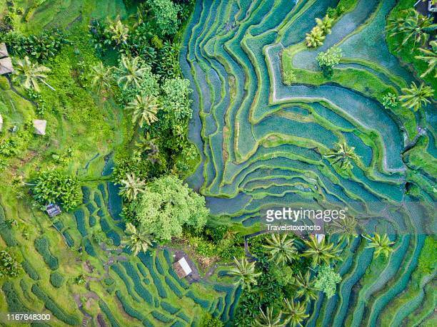 aerial view of rice terrace in bali indonesia - rice terrace stockfoto's en -beelden