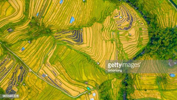 Aerial view of rice terraces. Bali, Indonesia