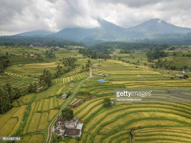 Aerial view of rice terraces in Ubud, Bali, Indonesia- Drone point of view