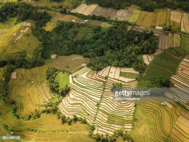 Aerial view of rice terraces in Ubud, Bali, Indonesia