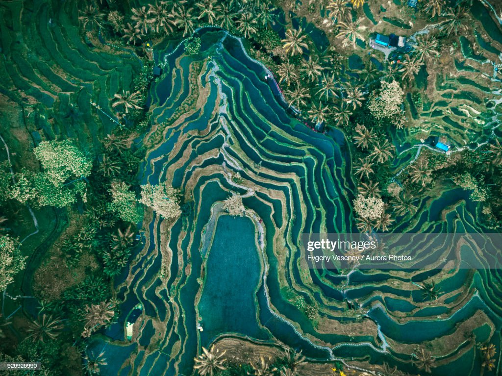 Aerial view of rice terraces, Tegallalang, Bali, Indonesia : Stock-Foto