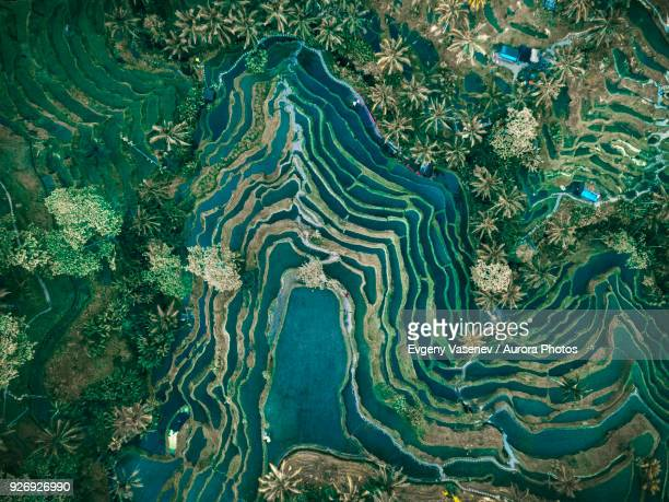 aerial view of rice terraces, tegallalang, bali, indonesia - aerial view stock-fotos und bilder