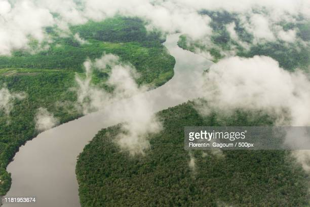 aerial view of river and forest - cameroun photos et images de collection