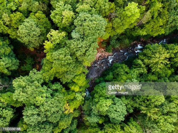 aerial view of river flowing amidst trees in pisgah national forest - national forest stock pictures, royalty-free photos & images
