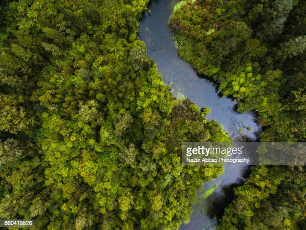 Aerial view of river flowing through dense forest.