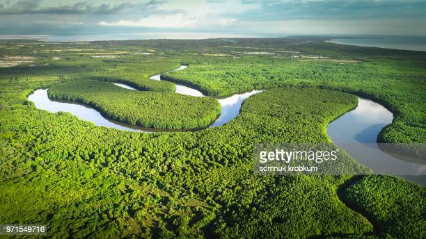 aerial view of river in mangrove forest - mangrove tree stock pictures, royalty-free photos & images