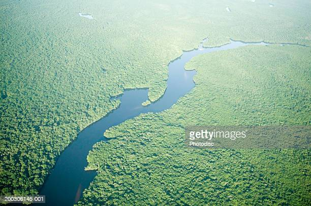 Aerial view of river through forest