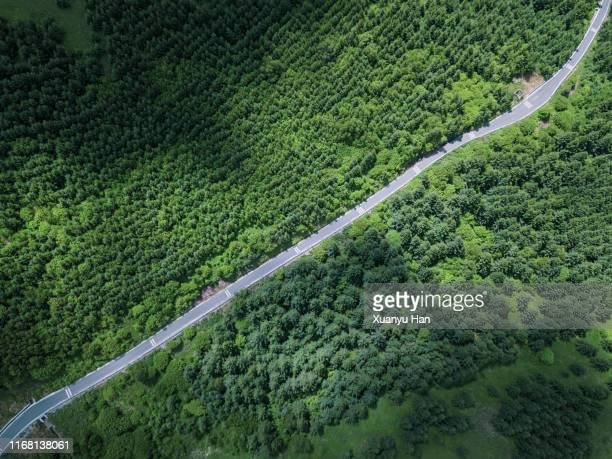 aerial view of road amidst forest - 豊富 ストックフォトと画像