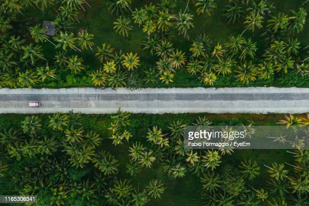 aerial view of road amidst tropical trees on land - philippines stock pictures, royalty-free photos & images