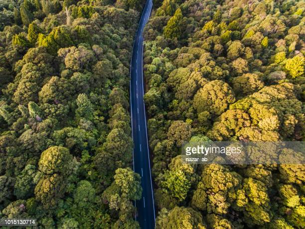 Aerial view of road cutting through forest.