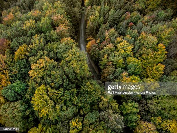 Aerial view of road going through forest