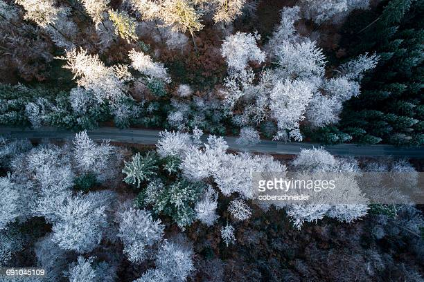 Aerial view of Road winding through snow covered trees, Salzburg, Austria