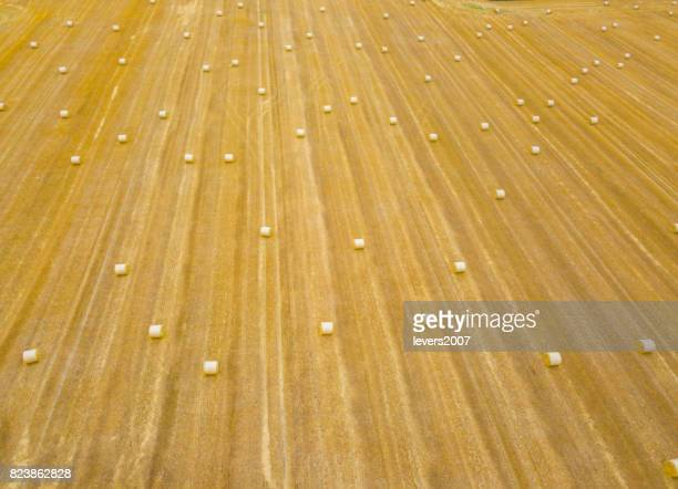 Aerial view of round bales of straw in summer