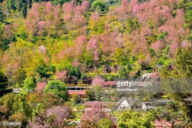 Aerial view of Sakura Cherry Blossom, Japan