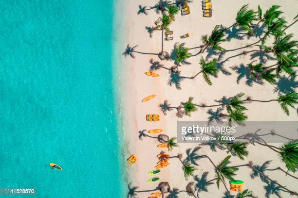aerial view of seacoast with palms - dominican republic stock photos and pictures