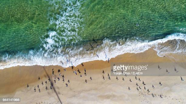 Aerial View Of Seagulls At Beach