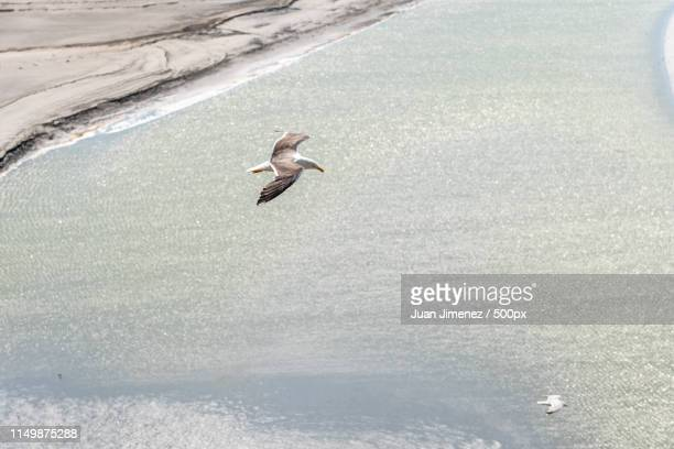 aerial view of seagulls flying on sea - cotentin photos et images de collection