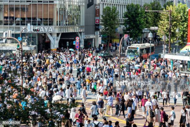 aerial view of shibuya crossing in tokyo, japan - pedestrian crossing sign stock photos and pictures