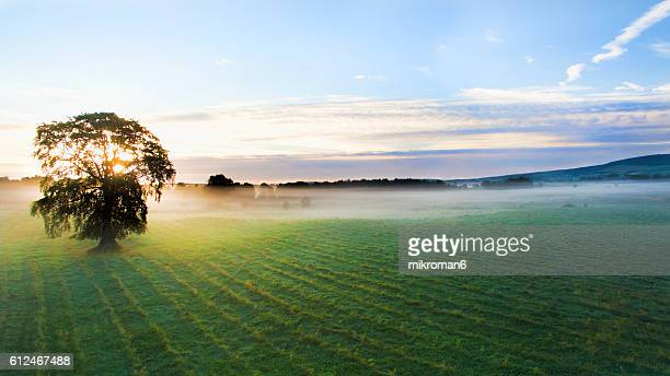 Aerial view of single tree over Tipperary fields on foggy morning  .