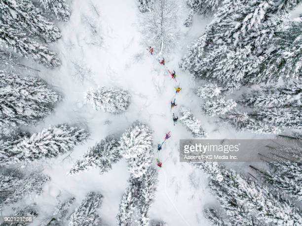 Aerial view of skiers following forest trail