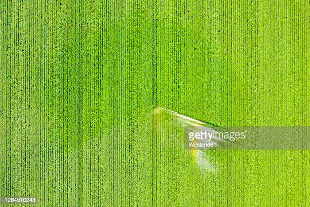 aerial view of sprinkler watering vast potato field in summer - crop stock pictures, royalty-free photos & images