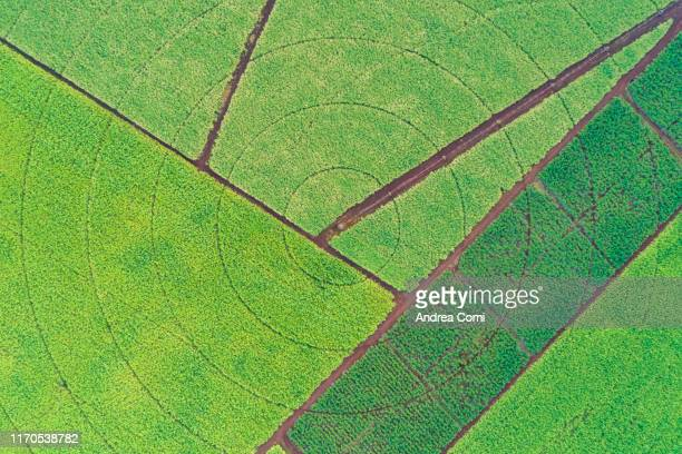 aerial view of sugar canes cultivation - cultivated land stock pictures, royalty-free photos & images