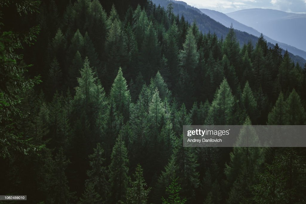 Aerial view of summer green trees in forest in mountains : Stock Photo