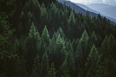 Aerial view of summer green trees in forest in mountains