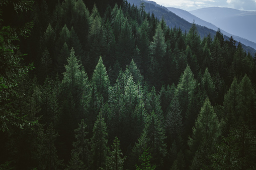Aerial view of summer green trees in forest in mountains 1062459010