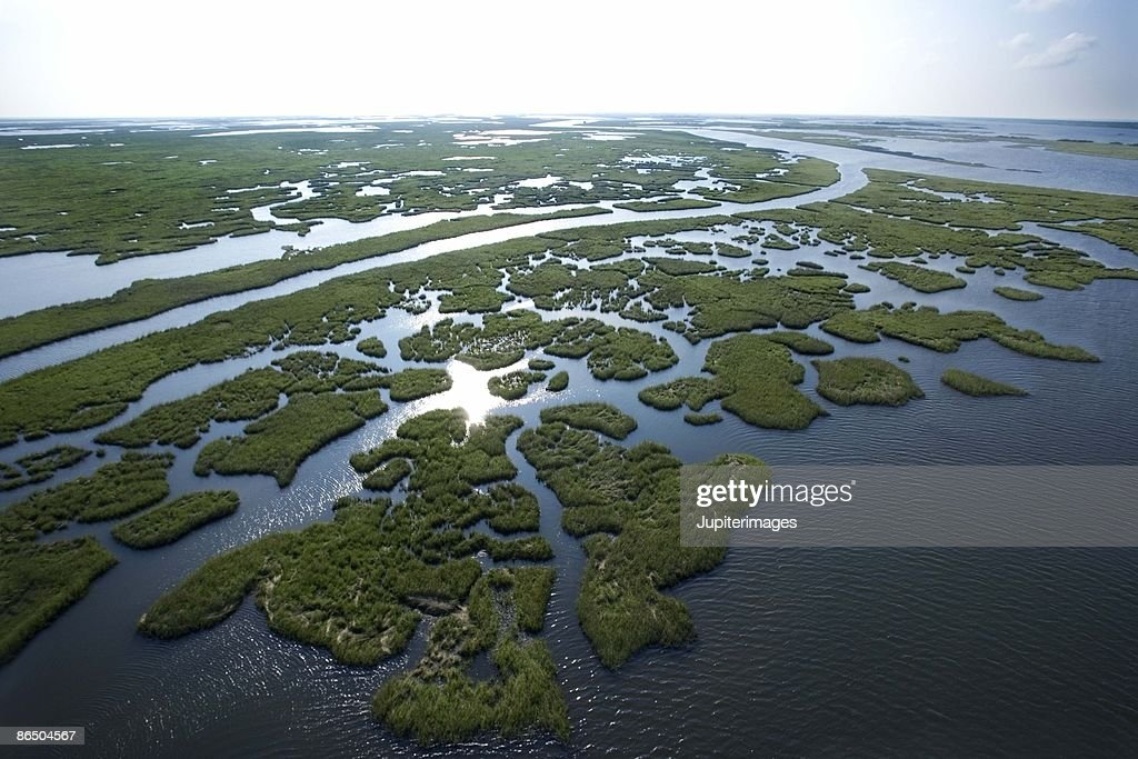 Aerial view of swamp in Louisiana : ストックフォト