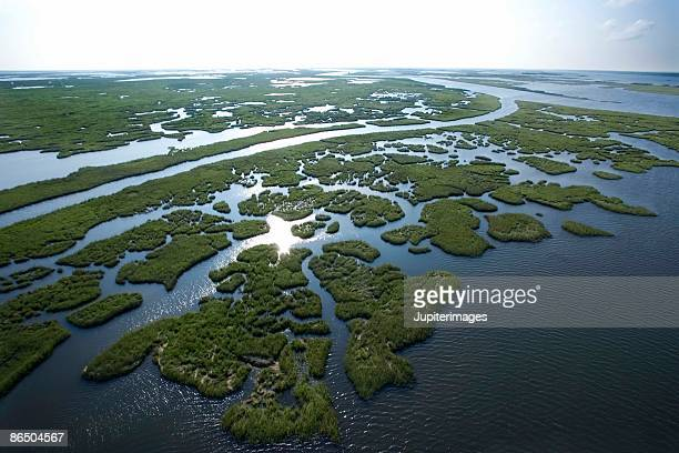 Aerial view of swamp in Louisiana