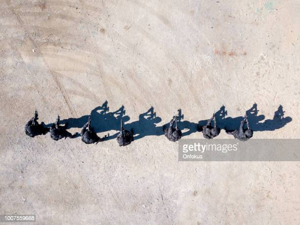 aerial view of swat police officers shooting with firearm - shooting crime stock pictures, royalty-free photos & images