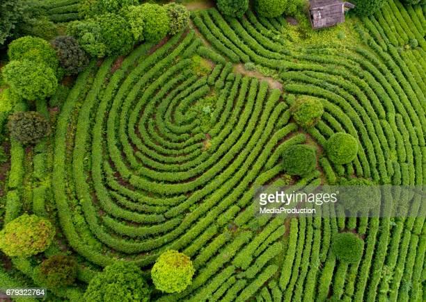 Luchtfoto van thee velden