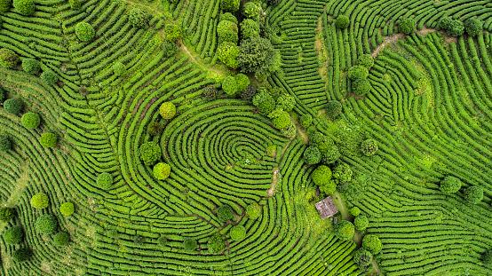 Aerial view of Tea fields 679322920