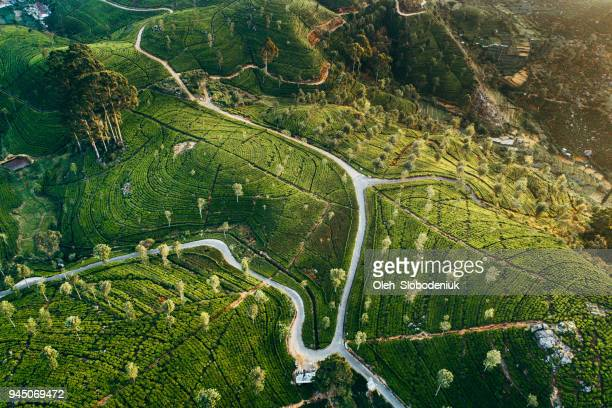 aerial view of tea plantation in sri lanka - sri lanka stock pictures, royalty-free photos & images