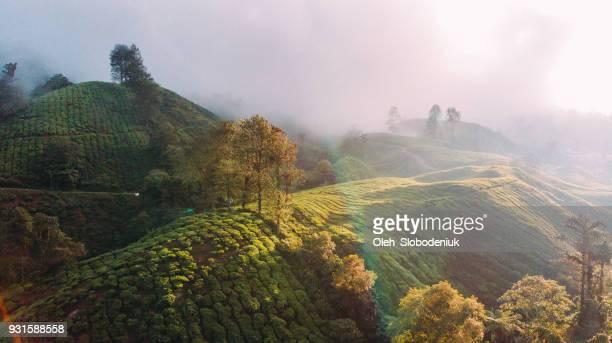 vista aérea de las plantaciones de té al amanecer - paisajes de india fotografías e imágenes de stock