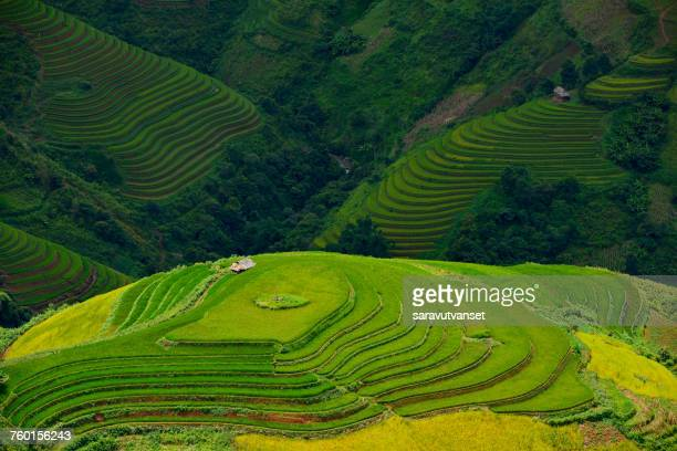 Aerial view of terraced Rice fields at sunrise, Vietnam