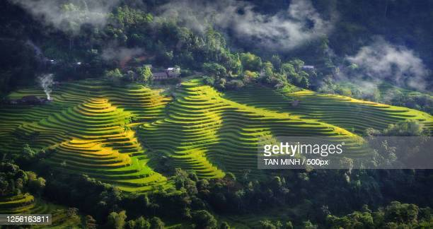 aerial view of terraced rice fields, ha giang, vietnam - images fotografías e imágenes de stock