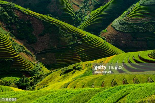 Aerial view of terraced rice fields, Mu Chang Chai, Vietnam