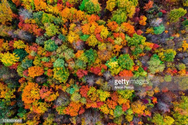 aerial view of the autumn forest. autumn foliage colors - season stock pictures, royalty-free photos & images