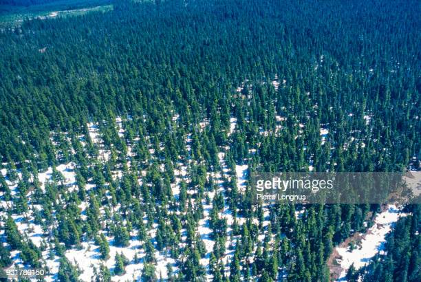 Aerial view of the boreal forest of northern Yukon. Canada