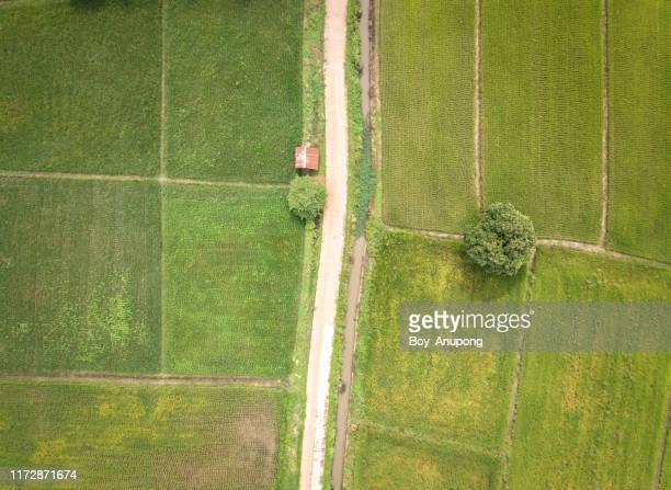 aerial view of the countryside road cut throug the green paddy field in chiang rai province of thailand. - southeast asia stock pictures, royalty-free photos & images
