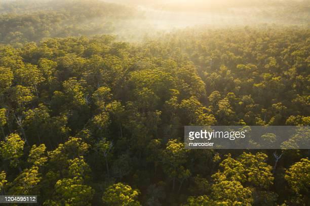 aerial view of the karri forest, pemberton, western australia, australia - western australia stockfoto's en -beelden