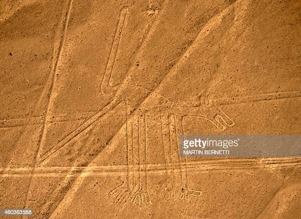 Aerial view of the know as the Dog at Nazca Lines some 435 km south of Lima Peru on December 11 2014 Geoglyphs can be seen only from atop the...