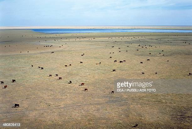 Aerial view of the pampas with Laguna La Loca and cattle grazing Santa Fe Province Argentina