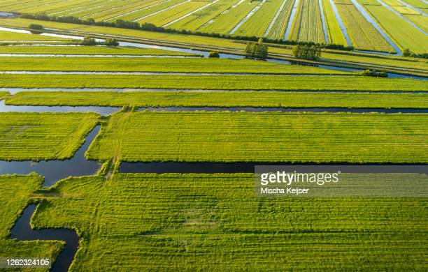 aerial view of the polder landscape near gouda, the netherlands - 干拓地 ストックフォトと画像